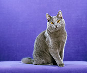 CAT 02 CH0140 01