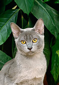 CAT 02 GL0003 01