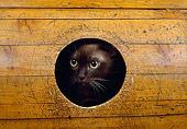CAT 02 GL0005 01