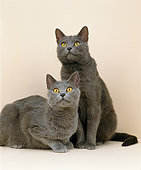 CAT 02 GL0006 01