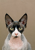 CAT 02 GL0007 01