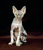CAT 02 GL0008 01