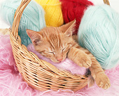CAT 02 GL0013 01