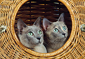 CAT 02 GL0016 01