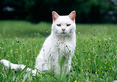 CAT 02 GR0096 01