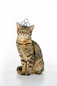 CAT 02 JD0019 01