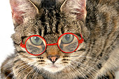 CAT 02 JD0021 01