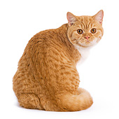 CAT 02 JE0003 01