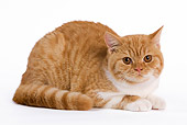 CAT 02 JE0004 01