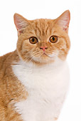 CAT 02 JE0005 01