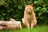 CAT 02 JE0011 01