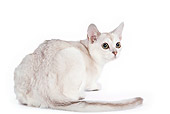 CAT 02 JE0015 01