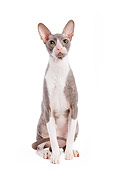 CAT 02 JE0017 01