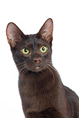 CAT 02 JE0019 01
