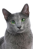 CAT 02 JE0024 01