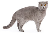 CAT 02 JE0027 01