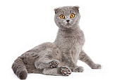 CAT 02 JE0028 01