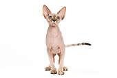 CAT 02 JE0046 01