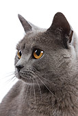 CAT 02 JE0049 01