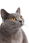 CAT 02 JE0050 01