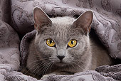 CAT 02 JE0052 01