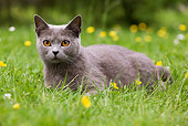 CAT 02 JE0054 01