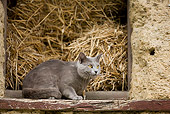 CAT 02 JE0056 01