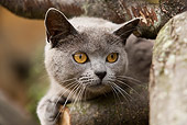 CAT 02 JE0057 01