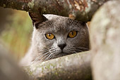 CAT 02 JE0058 01