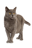 CAT 02 JE0064 01
