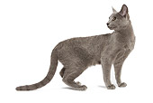 CAT 02 JE0065 01