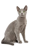 CAT 02 JE0066 01