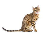 CAT 02 JE0071 01