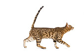 CAT 02 JE0072 01