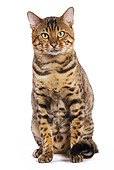 CAT 02 JE0073 01