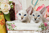 CAT 02 JE0079 01