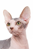 CAT 02 JE0083 01