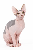 CAT 02 JE0086 01
