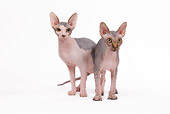 CAT 02 JE0087 01