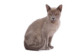 CAT 02 JE0088 01