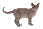 CAT 02 JE0089 01