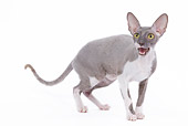 CAT 02 JE0091 01