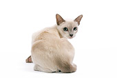 CAT 02 JE0094 01