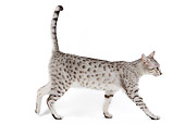 CAT 02 JE0096 01