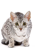CAT 02 JE0097 01