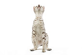 CAT 02 JE0098 01