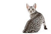 CAT 02 JE0100 01