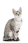CAT 02 JE0101 01