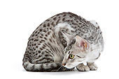 CAT 02 JE0102 01