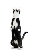 CAT 02 JE0110 01